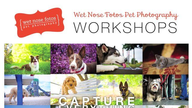 Wet Nose Fotos Pet Photography Workshops by Wet Nose Fotos. Go behind the scenes of a Wet Nose Fotos Pet Photography Workshop!  www.wetnosefotos.com #wetnosefotos #petphotography #photography #pet #dog #cute #pooch #outdoor #cute #colorful #australia #shannonplummer #phototips #workshop #video #tips #tutorial #animals
