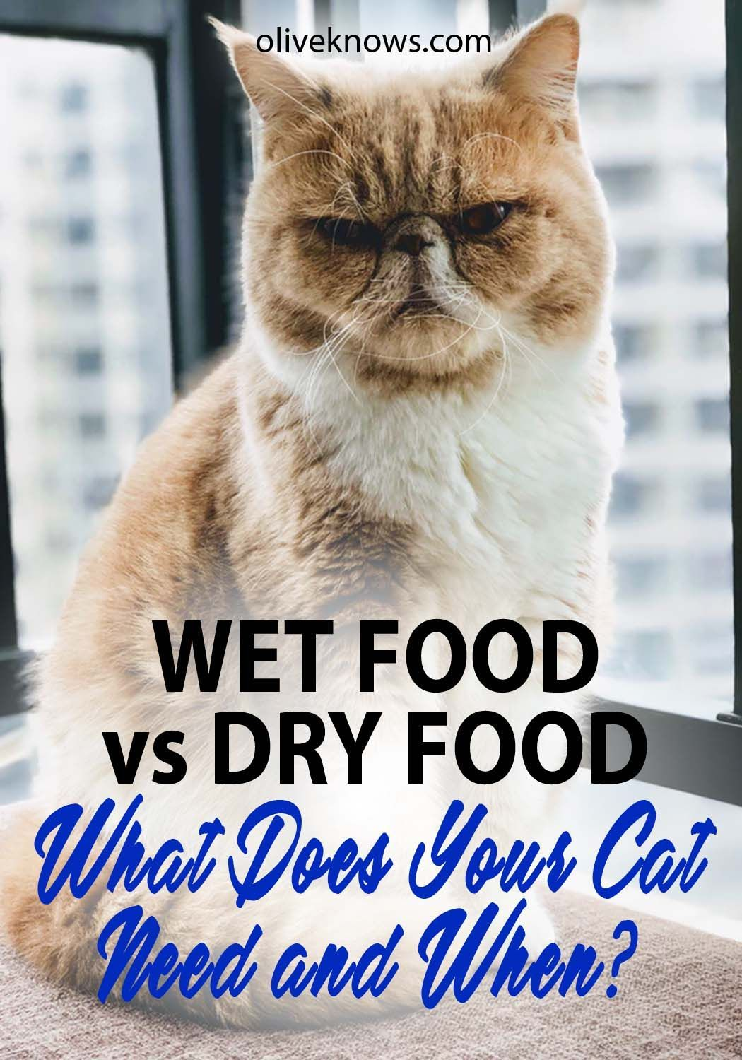 Wet Food Vs Dry Food What Does Your Cat Need And When Oliveknows Cat Food Reviews Cat Care Tips Cats