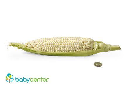24 Semanas. ¡Tu bebé no para de crecer! Tiene el tamaño de un elote (mazorca de maíz). Desde la semana pasada ha aumentado un cuarto de libra (alrededor de 113 gramos #desarrollofetal #embarazo