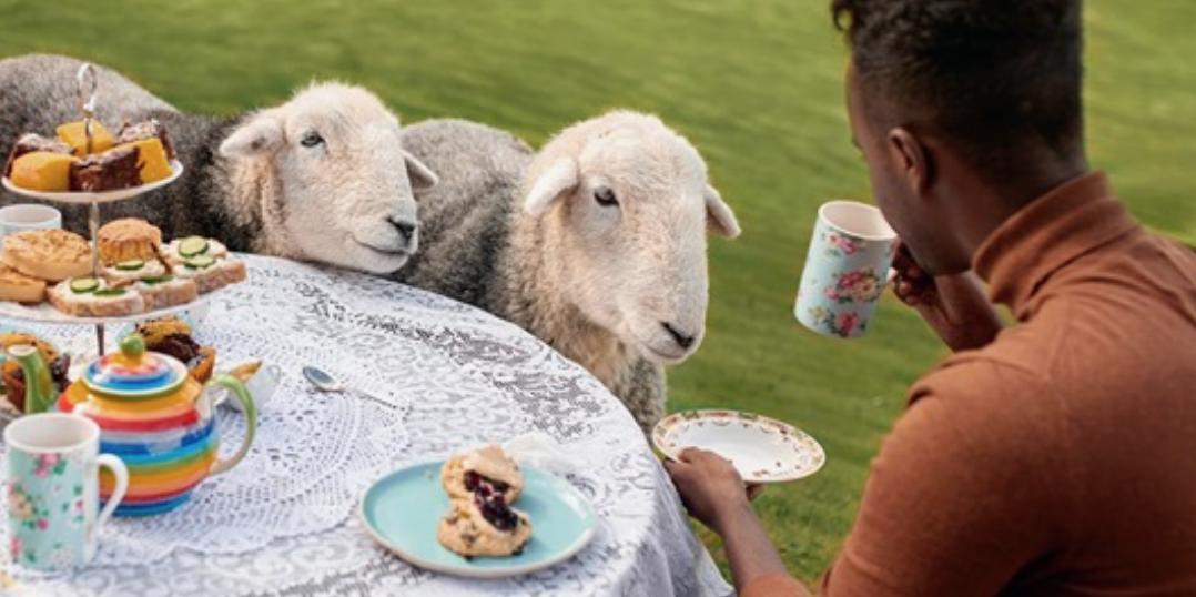 Baby Lamb (Sheep) Goes Baa - CUTEST Compilation - YouTube