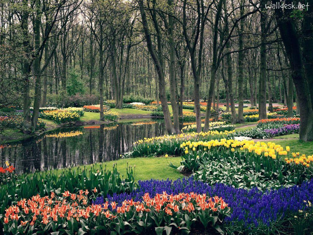 Keukenhof Gardens Lisse The Netherlands Images To Desktop Jardins Flowers Dutch Gardens Beautiful Gardens Most Beautiful Gardens
