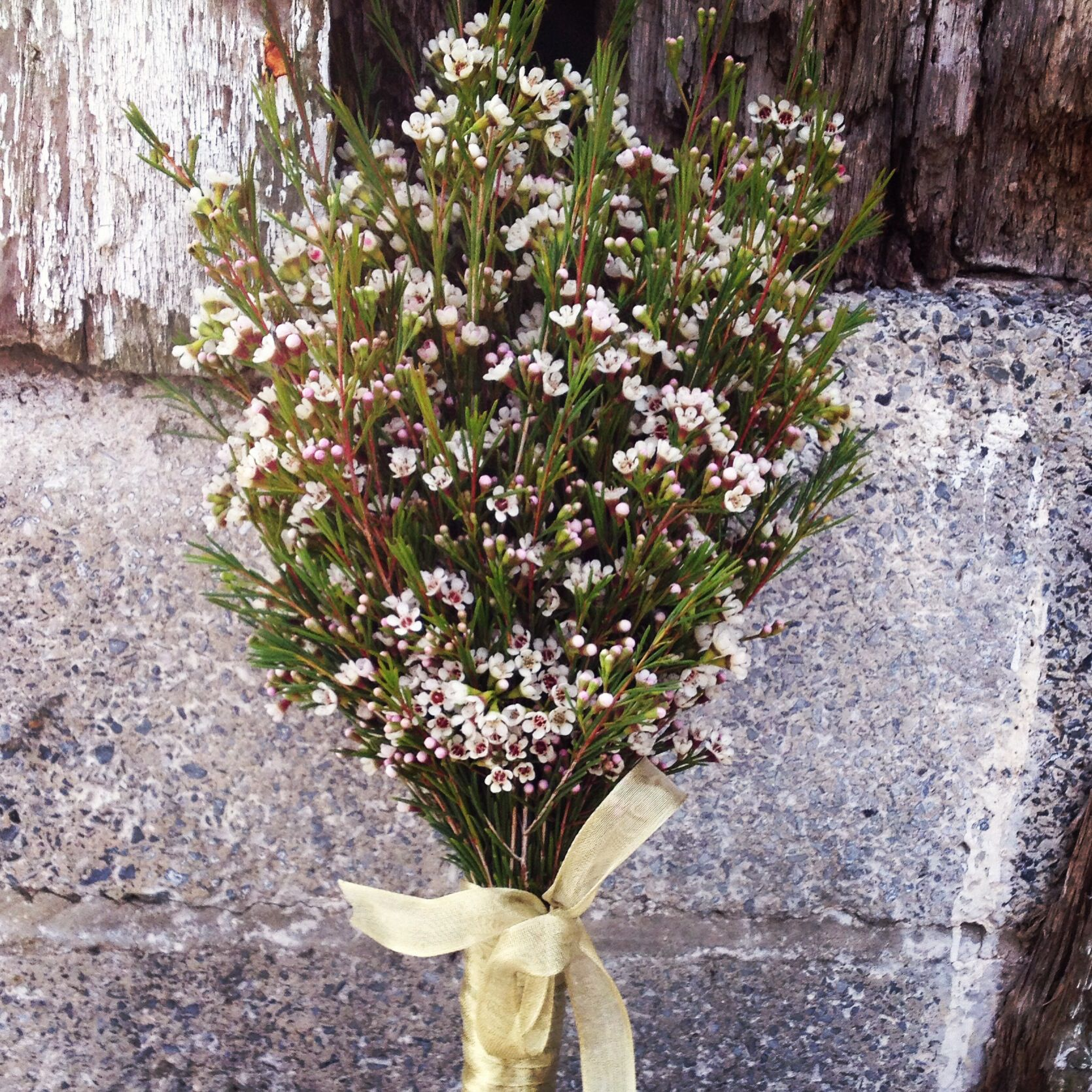 Heres a spin on the current babys breath trend wax flower heres a spin on the current babys breath trend wax flower bouquet izmirmasajfo