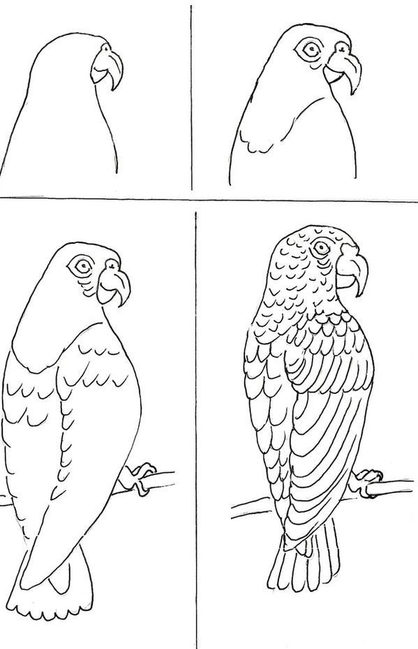 Parrots art class ideas drawing