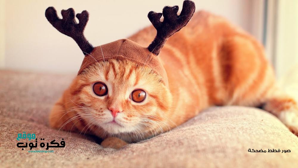 أجمل صور قطط مضحكة 2019 قطط حزينة روعة 3 Cat Wallpaper Cats Funny Hats