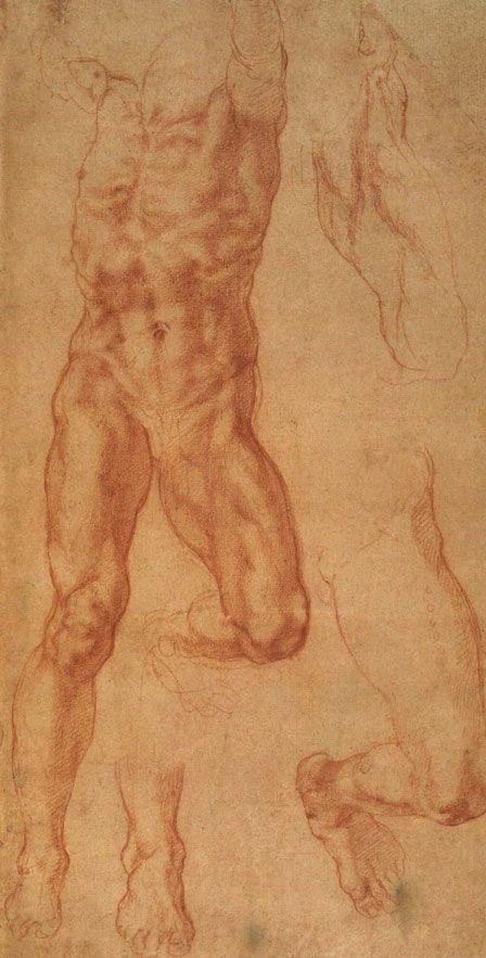 Michelangelo ~ Anatomical study | Drawing | Pinterest | Anatomía ...