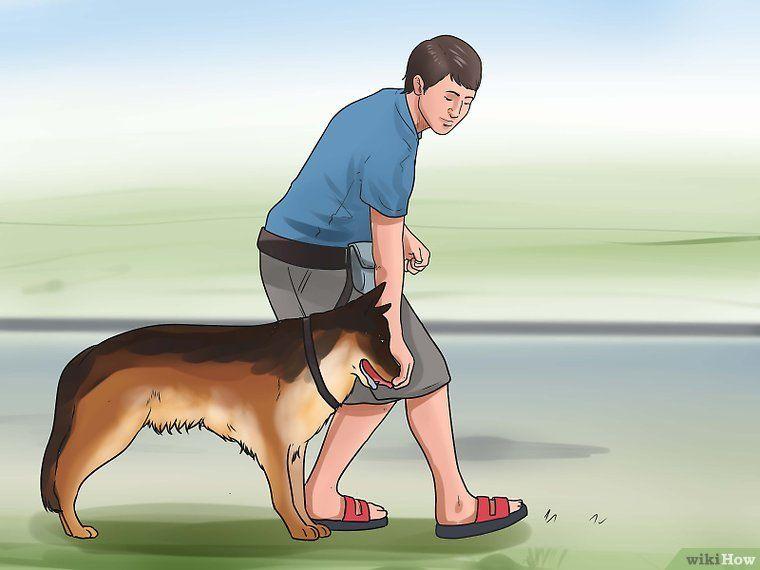 Train An Older Dog To Walk Calmly On A Leash Your Dog Dogs Dog