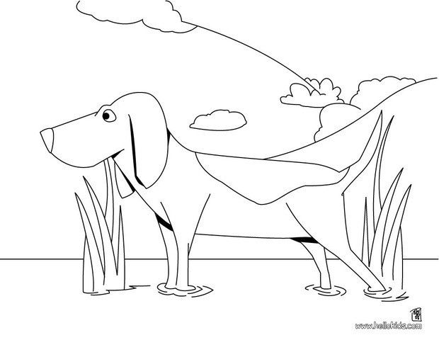 Beagle Coloring Page From Dog Coloring Pages Add Some Colors Of