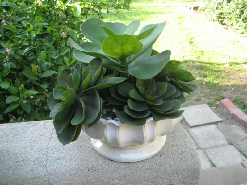 Los Angeles Home Staging Faux Plants