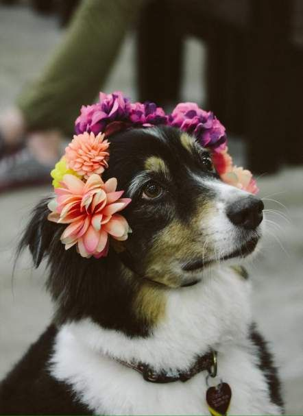 Scout In The Earthbound Dog Blog Aussie Earthbound Dog Photoshoot Interesting Animals Pets