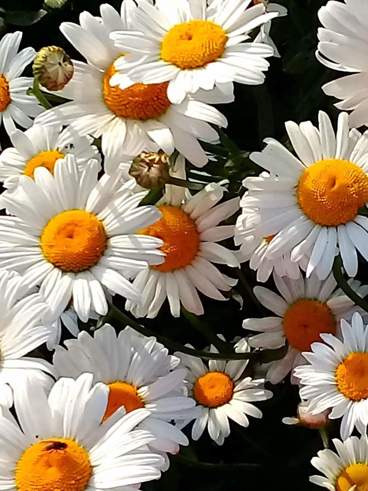 Обои Коллаж, крылья, цветы. Разное foto 18