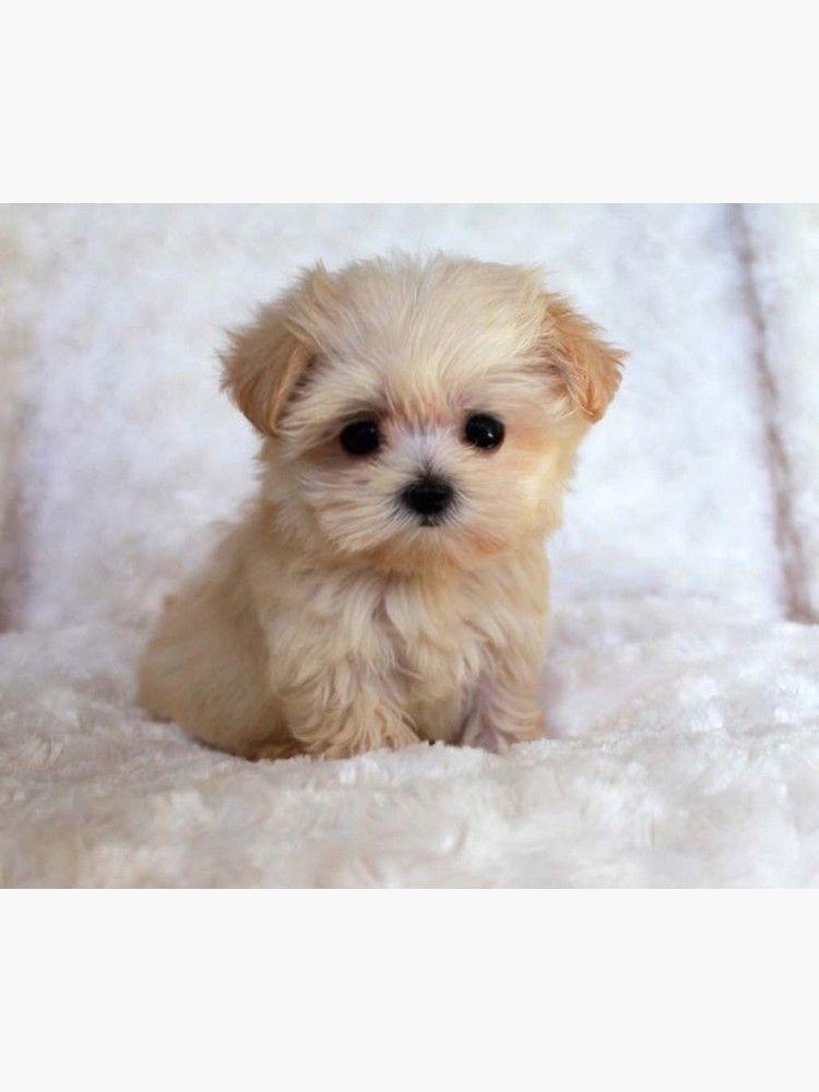 'Cute Puppy' Poster by BigTomo
