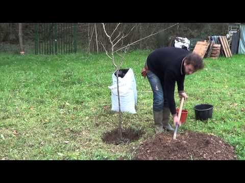 Como Plantar Un Arbol Frutal Vergel Organico La Huertina De Toni Arboles Frutales Arboles Planta La Huertina De Toni