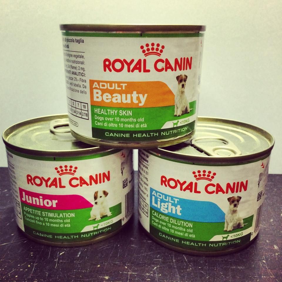 Royal Canin Cans For Mini Dogs Stocked At Aarons Pets Ltd Range To Suit Every Age And Lifestyle Especially For Dogs Under With Images Food Animals Mini Dogs Royal Canin
