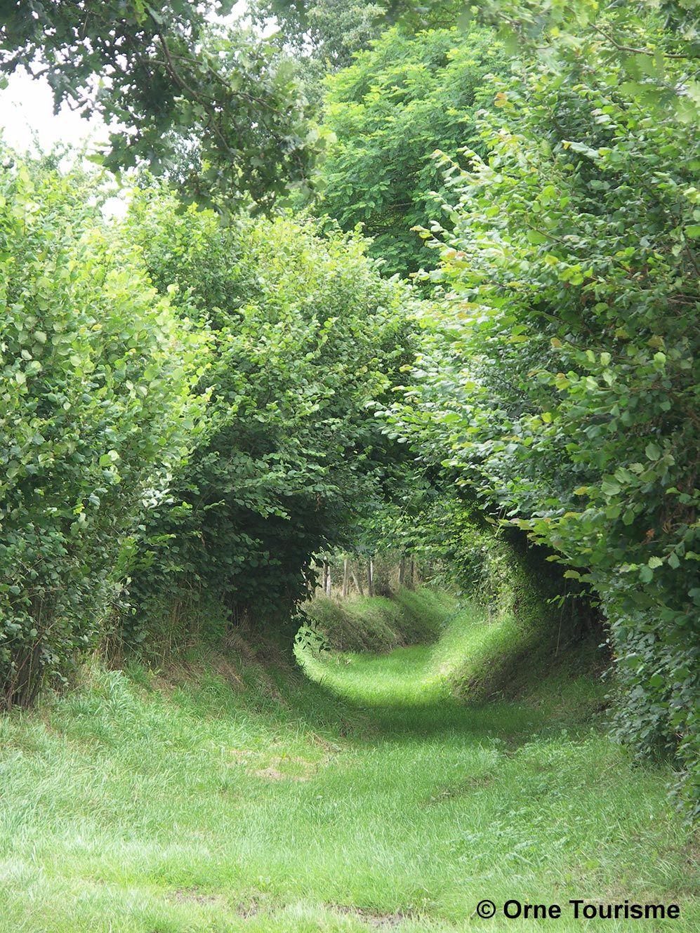 Image Chemin De Campagne
