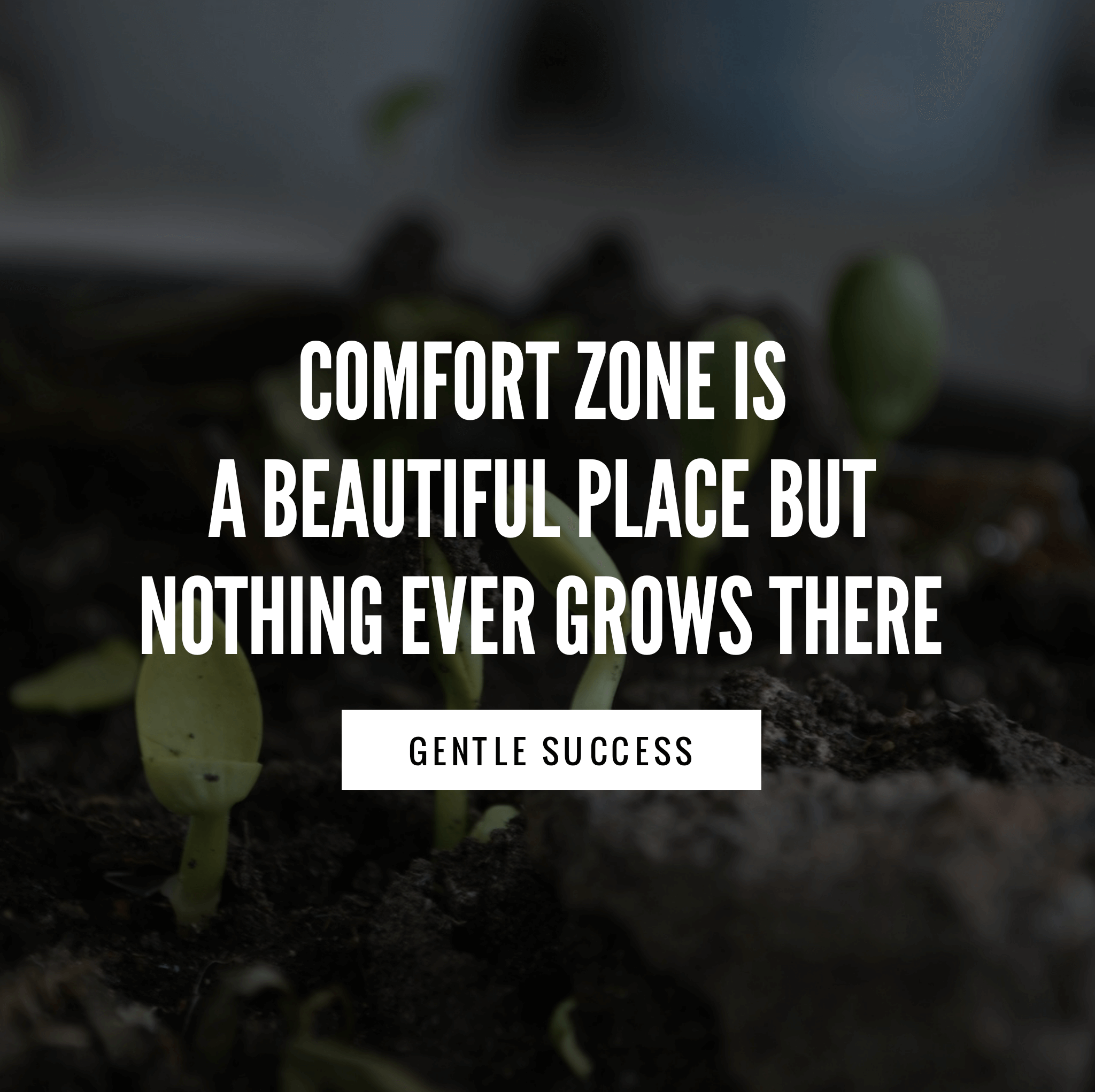 Don T Stay In Your Comfort Zone Success Quotes Quotes Comfort Zone