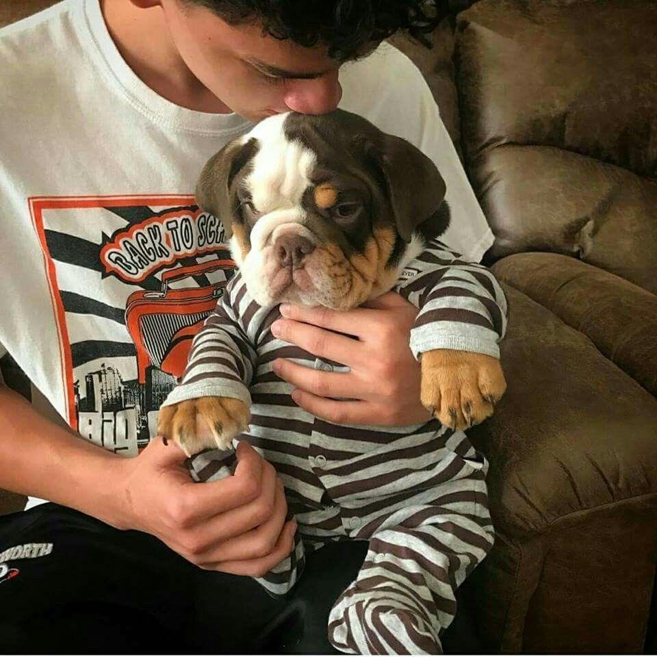 Fresno Bulldogs Gang History Fresno Ca Bulldog Cute Baby