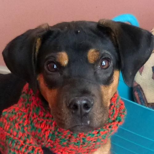 Bermuda Foster Home Is An Adoptable Hound Dog In Valley View Oh