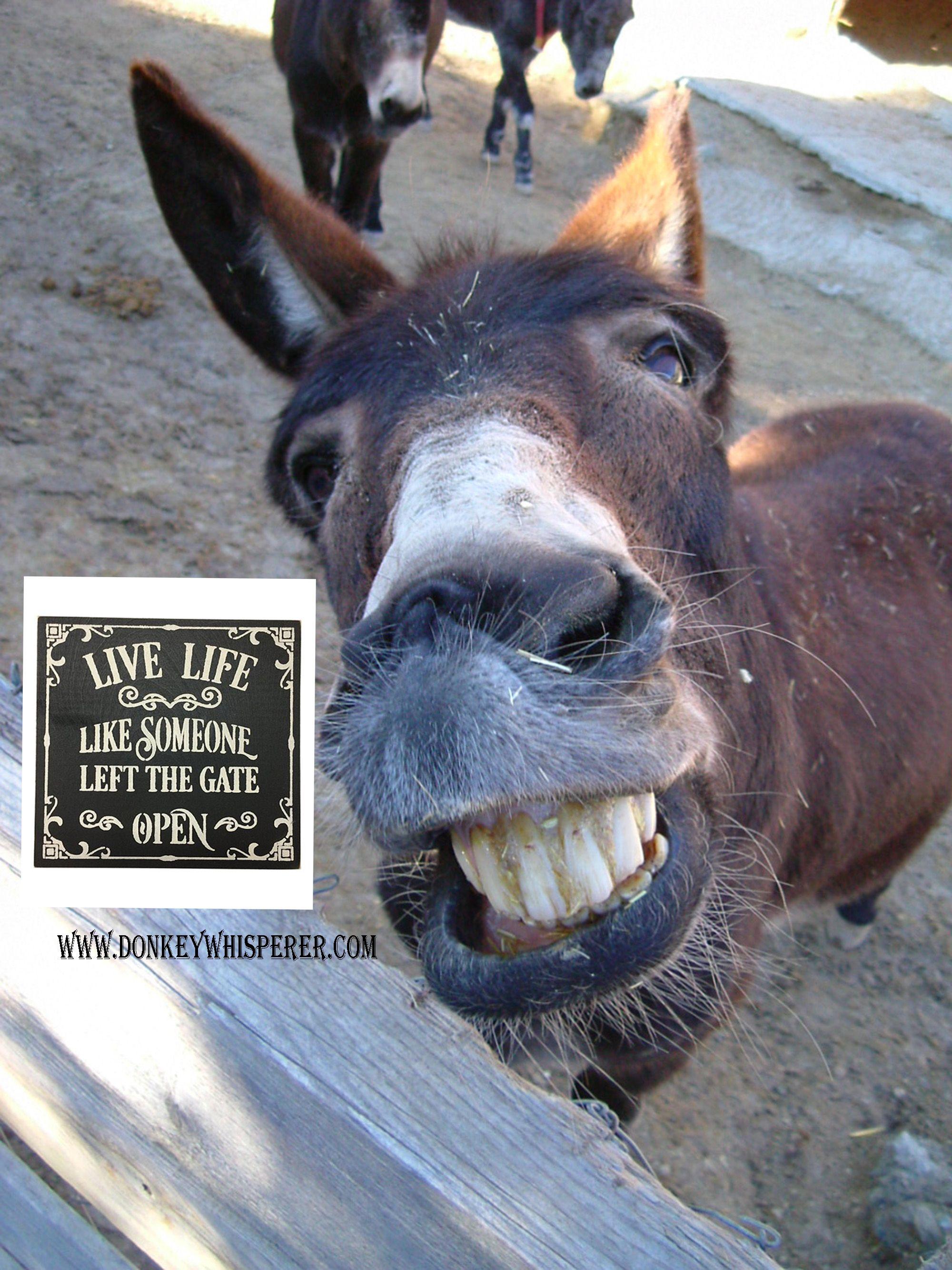 Funny Donkey Pictures : funny, donkey, pictures, Someone, Funny, Donkey, Pictures,, Funny,