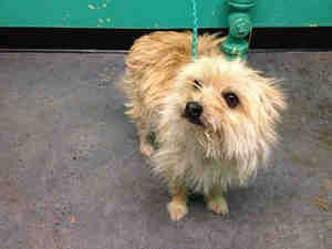 Adopt Mason On Cairn Terrier Dogs Up For Adoption Terrier Dogs
