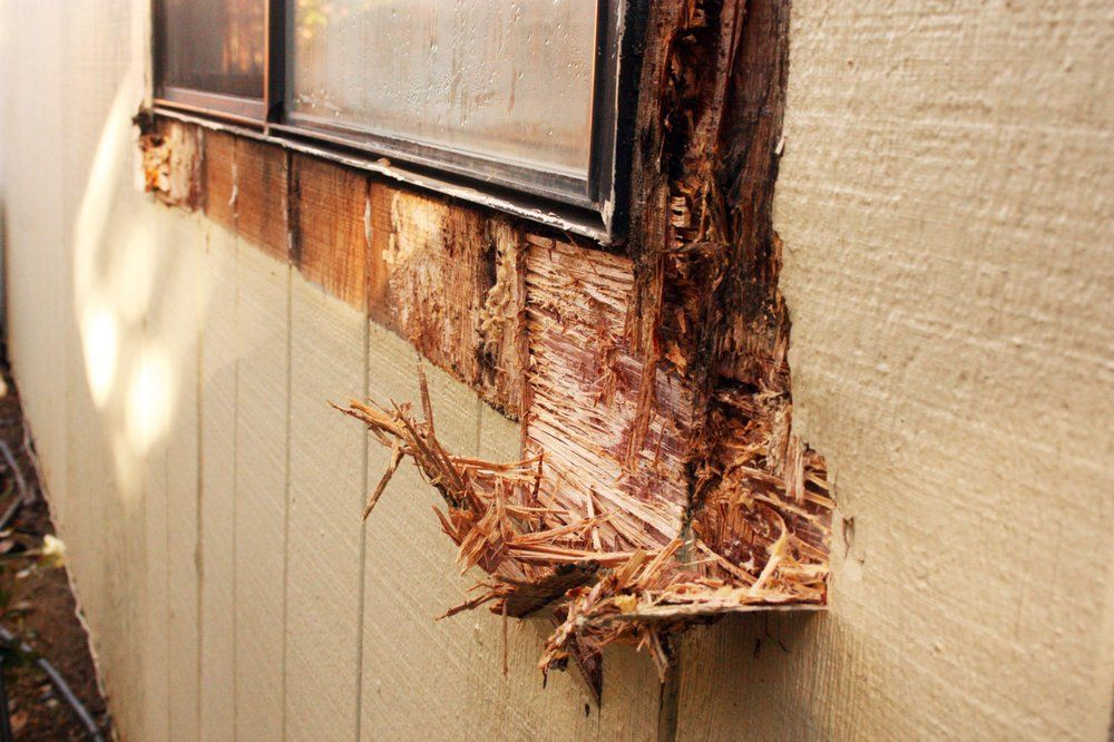 Dry Rot Is A Very Common Problem Dry Rot Creating Fungus Grows