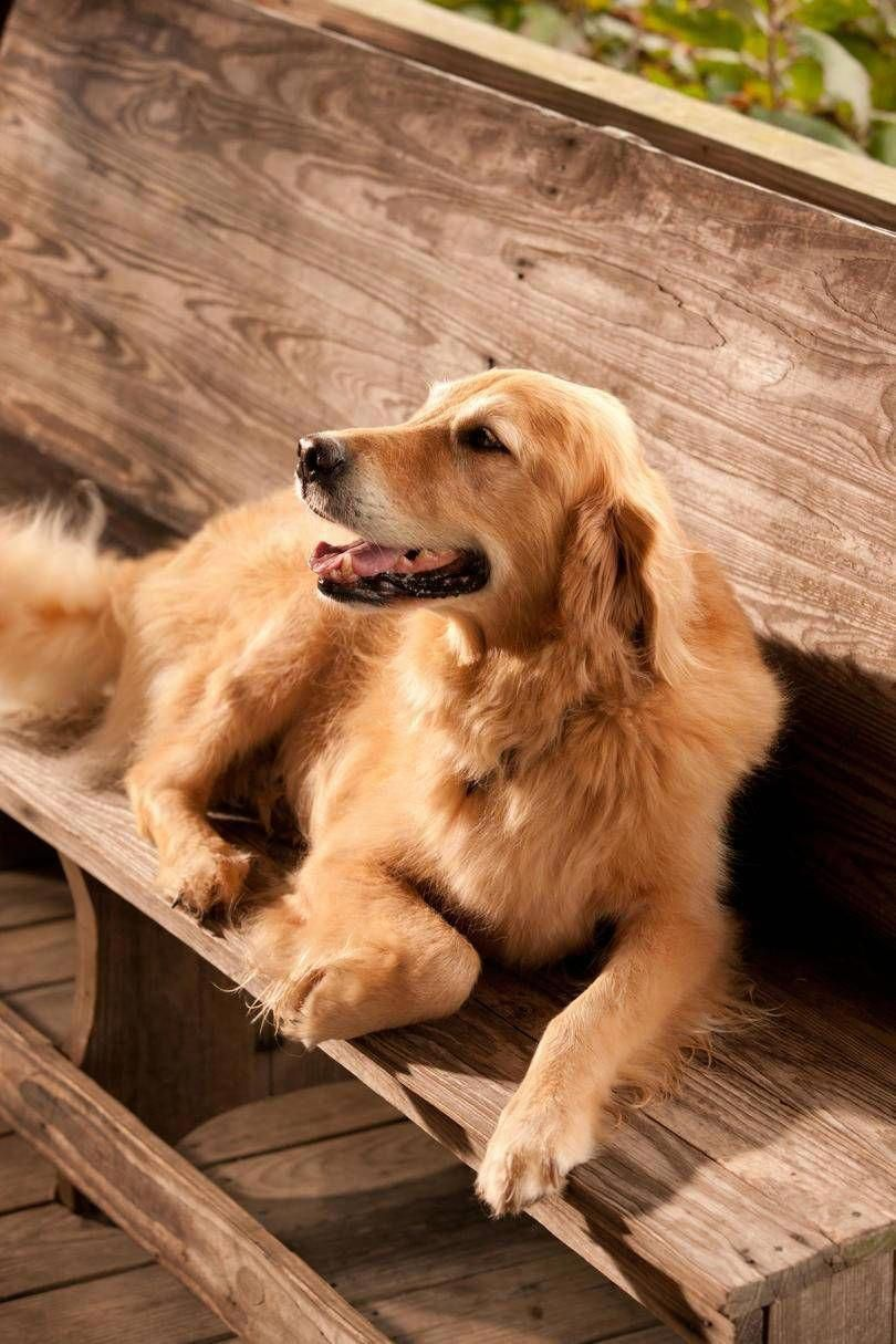 Our Favorite Names For Southern Dogs Dogs Golden Retriever