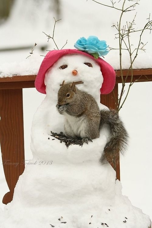 Image result for snow girl and squirrel