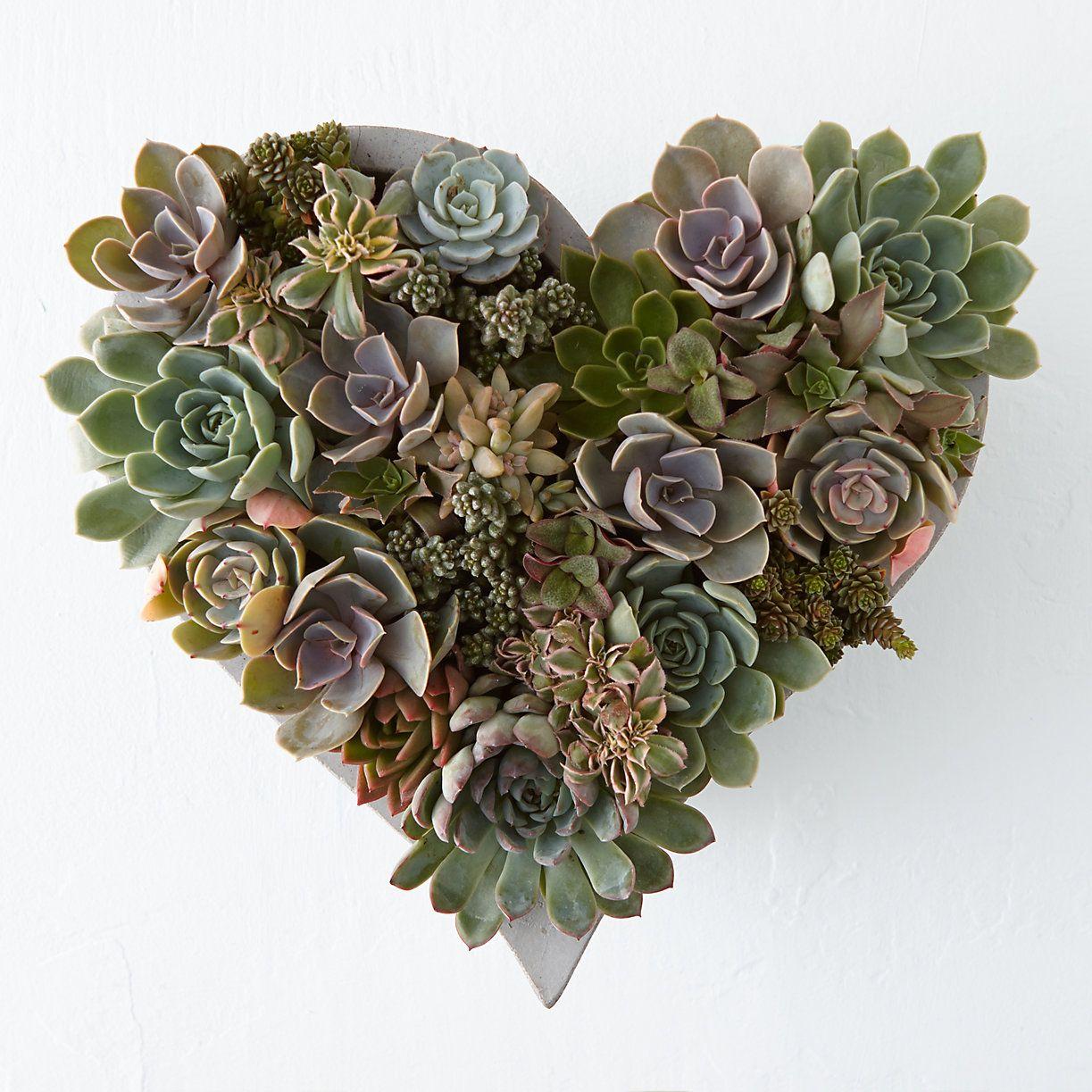 Succulent Heart Garden In Valentines + Gifts Blooming