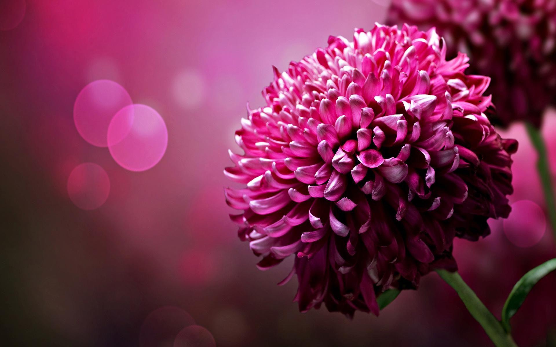 Providing You Widescreen High Defination Hd Desktop Nice Wallpapers 1920 1200 Choose Flower Desktop Wallpaper Purple Flowers Wallpaper Beautiful Flowers Images