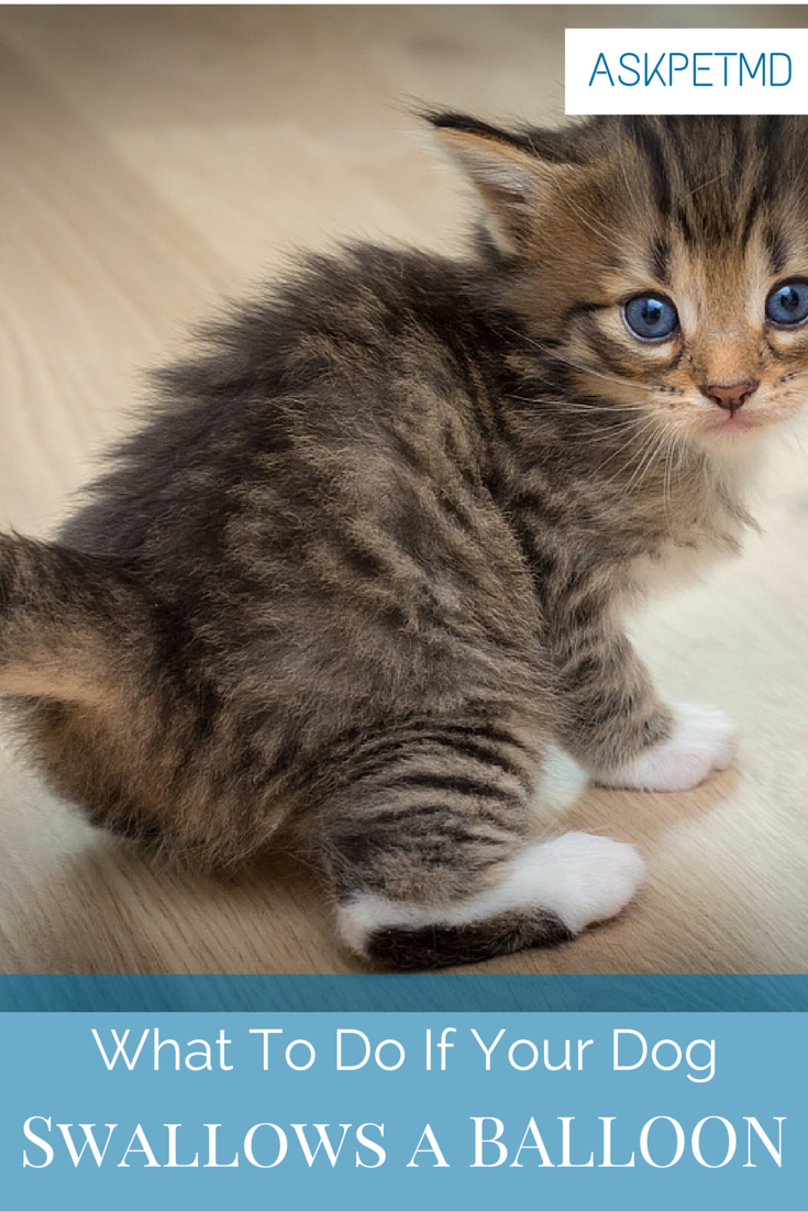 9 Signs Of A Sick Kitten And What To Do Petcarerx
