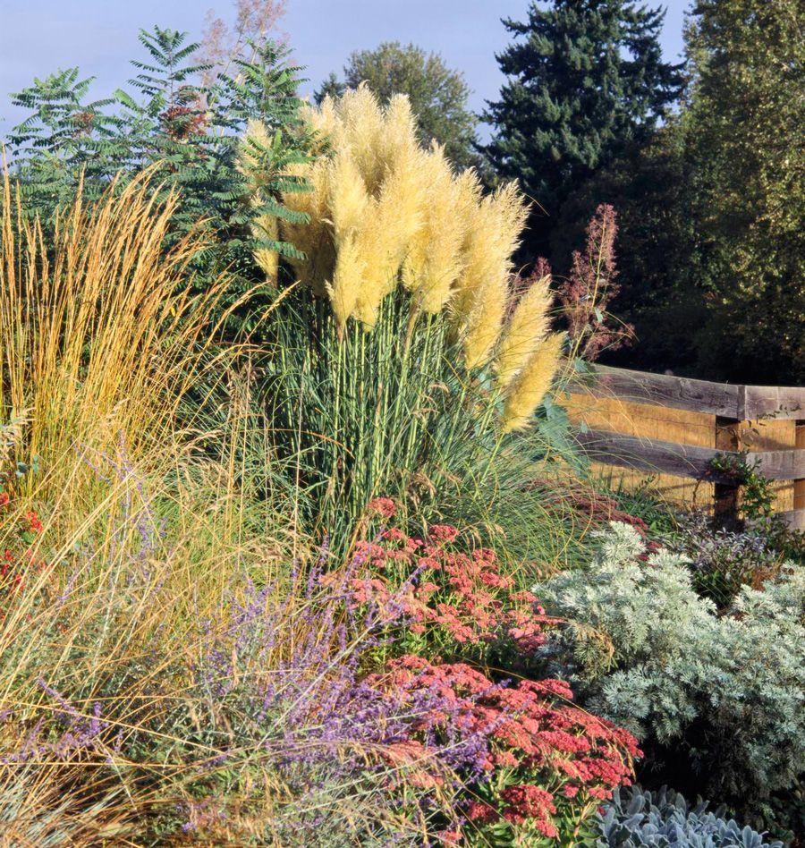 Best Ornamental Grasses For Midwest Gardens Ornamental Grass Landscape Grasses Landscaping Ornamental Grasses