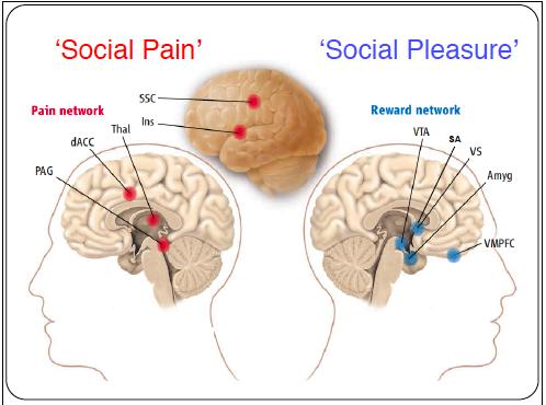 diagram of brain and pain schematics online Area of Brain Pain