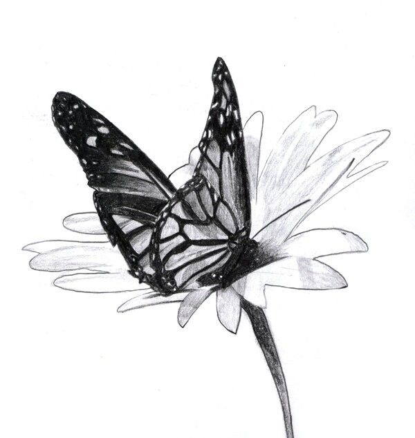 Pin by vanessa sanders on cards   Butterfly drawing ...