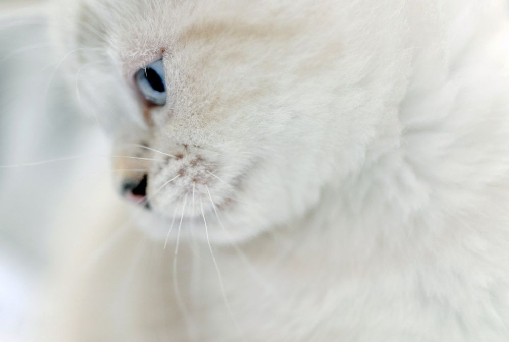 25 Of The Most Purrfect Cat Photos 5 Cats