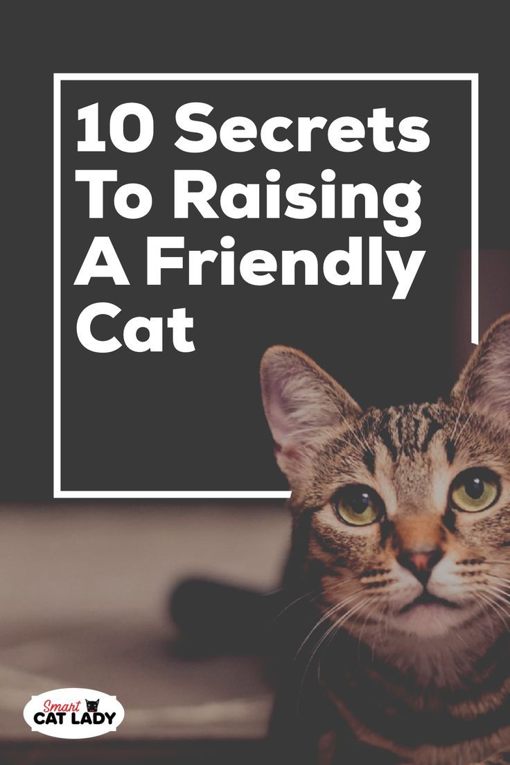 how to raise a kitten to be nice