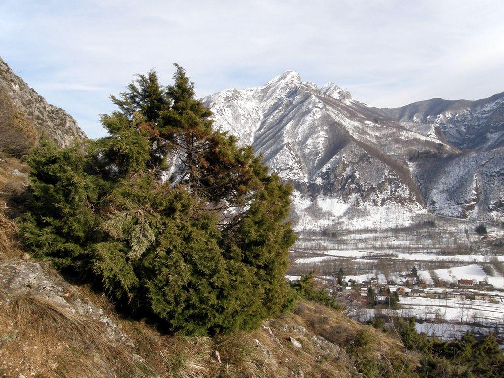Il ginepro di FeniciaParco Naturale delle Alpi Marittime