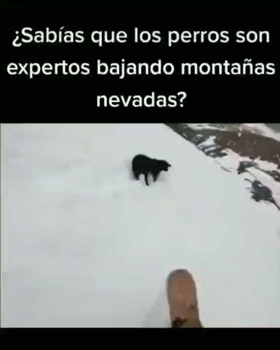 Viralmania Memes Youtuber Viralmaniaelrey Fotos Y Videos De Instagram Memes