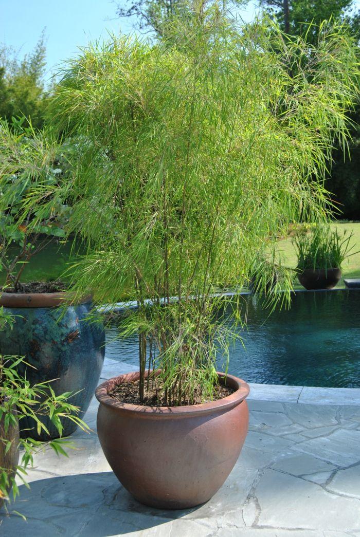 pflegeleichte gärten bambus blumentopf schöne gartenideen - garten pflegeleicht modern