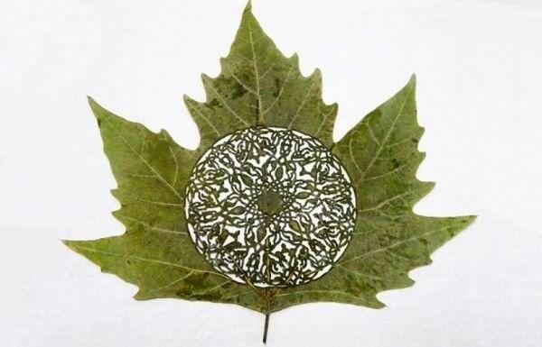 Arte en hojas, pero en hojas de árboles Leaf art