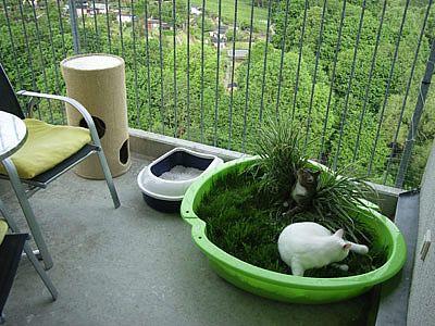 ein kleiner katzenbalkon katzenm bel pinterest katzen balkon und katzenm bel. Black Bedroom Furniture Sets. Home Design Ideas