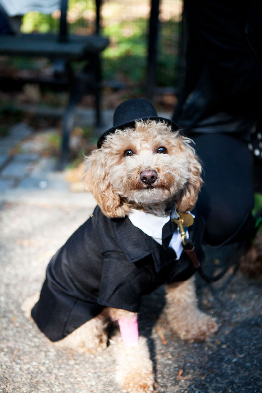 Tompkins Square Halloween Dog Parade Pictures