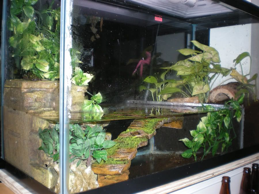 Pet frog tank setup for Turtle fish tank