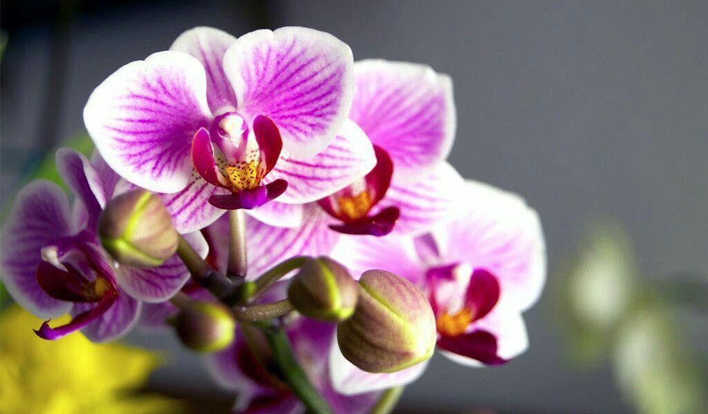 flowers #orquideas #orquideasque florecen #beautiful