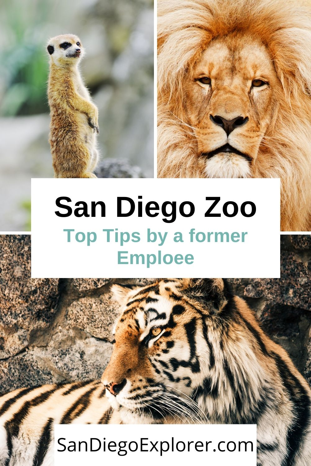 San Diego Zoo Tips By A Former Zoo Employee Must Read Before Visiting San Diego If You Re Going To The Zoo Th San Diego Travel San Diego Zoo Wildlife Travel