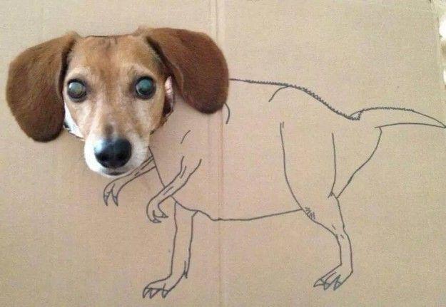 Dogzilla Dog Sitting Animal Memes Animals