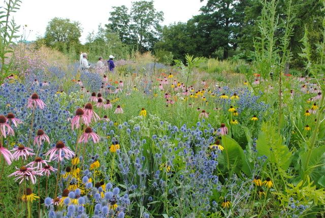 The Garden Blog Kasi Andrew Bellingham Rosliny Miododajne Gardening Blog Garden Plants