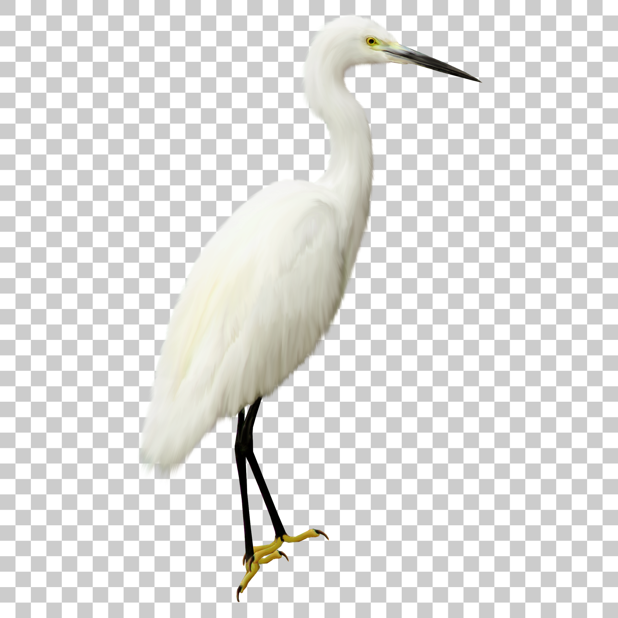 Crane Stork Bird Png Image With Transparent Background Png Images Image Stock Images Free