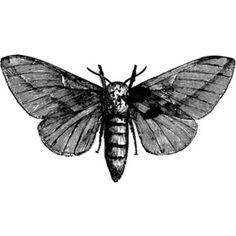 Moths for days.