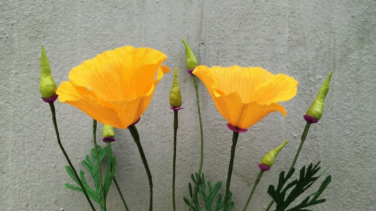 Abc Tv How To Make California Poppy Paper Flowers From Crepe Paper