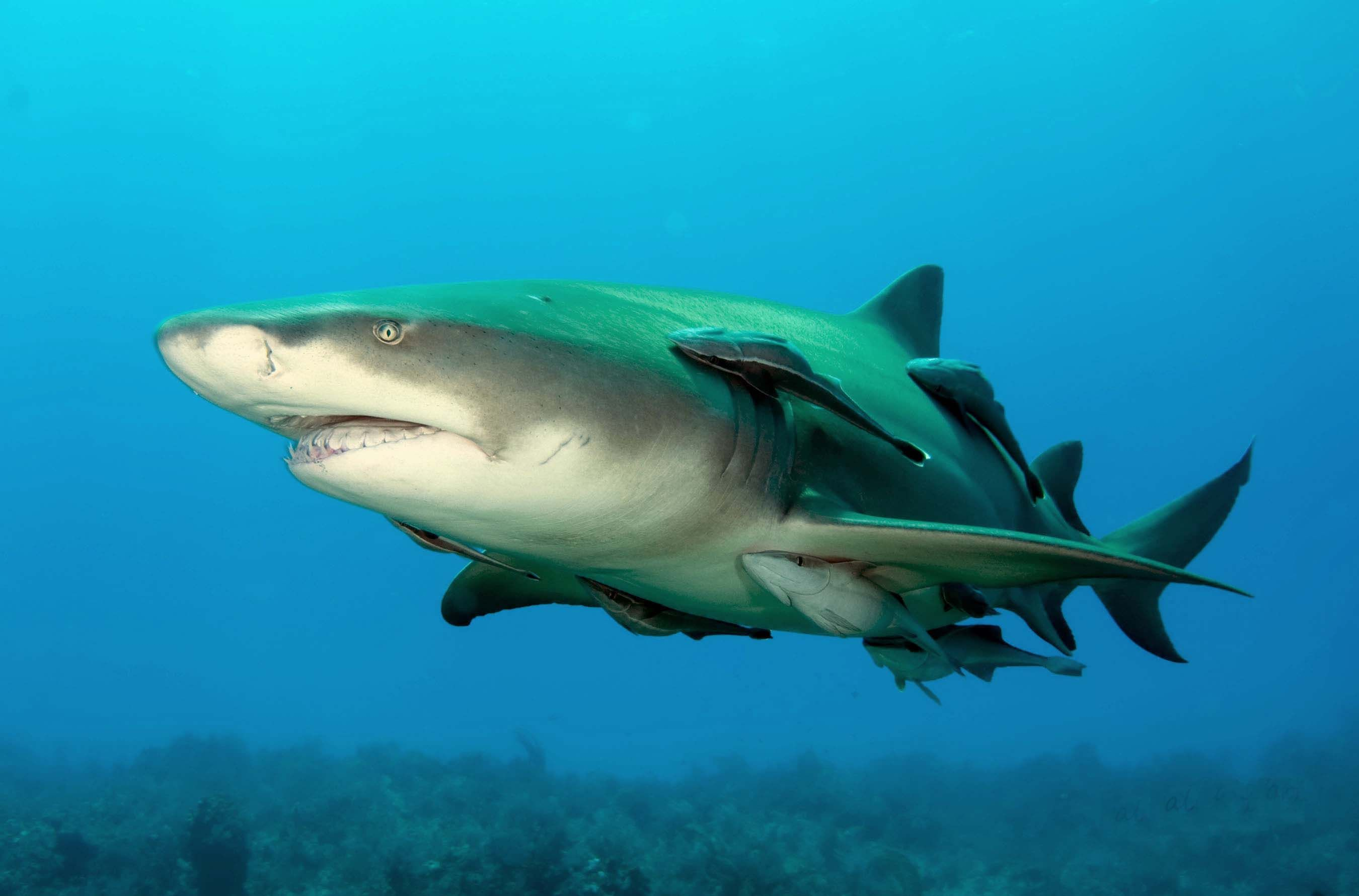 Since sharks give birth to pups, and a few species lay eggs