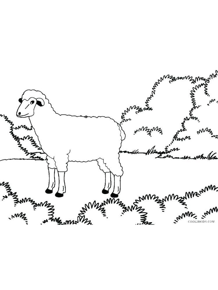 Dall Sheep Coloring Pages. Sheep is one of the ruminants